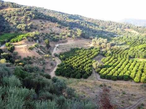 Alikianos, Creta 4